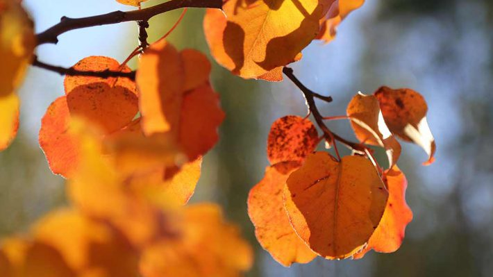Fall/autumn leaves - yellow, orange, red