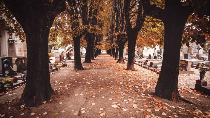 Tree-lined walkway through European cemetery