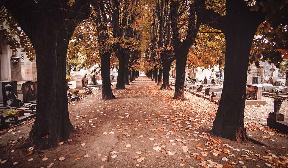 Tree-lined walkway through European cemetery